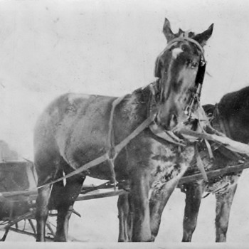 My Canada Family in Sleigh pulled by horses