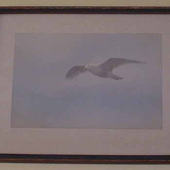 "Seagull Water Color ""The Wanderer"""