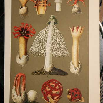 German Chromolithograph of Interesting Fungi - Visual Art