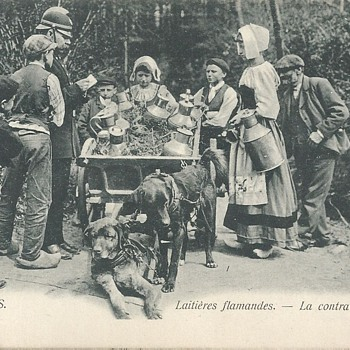 LAITIÈRES FLAMANDES - La CONTRAVENTION. - Postcards