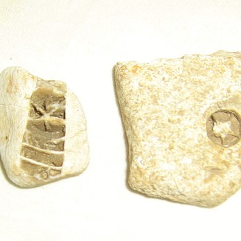 Star fossils from Missouri