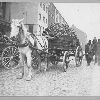 Boston Fruit Company - Photographs
