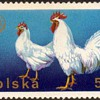"""Poland - """"Poultry"""" Postage Stamps"""
