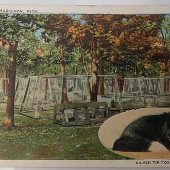 Fox (Type of Canine) Farm, Early 1900s