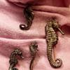 Carl Schon seahorse pins