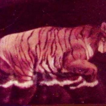 """Tiger walking in Water"" - Visual Art"