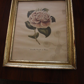Camellia's in Borghese Frames