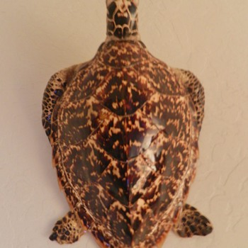 Taxidermy Sea Turtle from Japan - Soldier Bring-Back