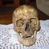 old human skull