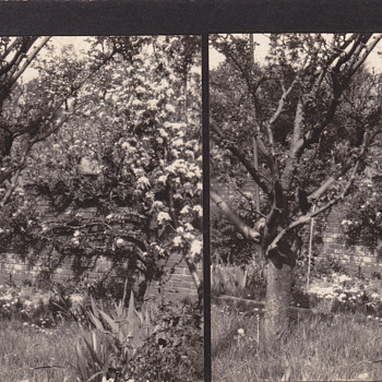 Stereoview - Private13 - Photographs