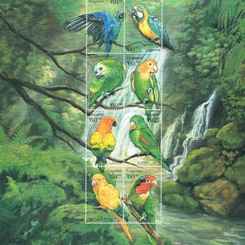 Birds and parakeets of South America