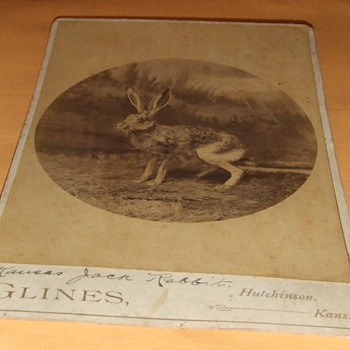 Kansas Jack Rabbit Cabinet card - Photographs