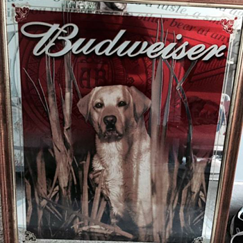 Budweiser Yellow Lab