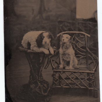 Two Well-Trained Dogs Tintype Collection Jim Linderman