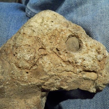 lizard fossil