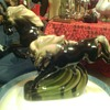 Two horses Galloping wild glossey bone china