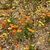 Very Special Wildflower Bloom!