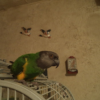 My Bird - Joey - Animals