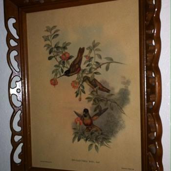 Hummingbird lithograph  - Visual Art