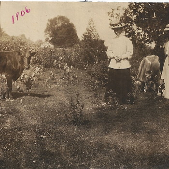 One day at my Great Parents FarmHouse,Château-Richer, Quebec City, Summer 1906 - Photographs