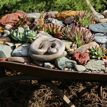 Old Wheelbarrow filled with native succulents and a rattlesnake! - Tools and Hardware