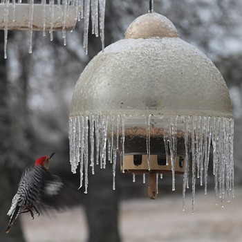 Icicle laden Big Top bird feeder delimma : ) - Animals