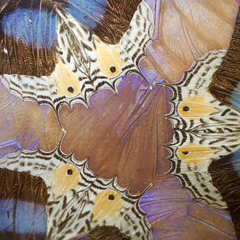 French Butterfly Marquetry & Wrought Iron Vide Poche - Art Nouveau