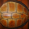 ANTIQUE SEA TURTLE SHELL, HELP IDENTIFY THIS!!!