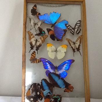 Vintage butterflies framed