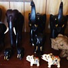 12 Elephants and 2 water buffalo!  From Garage sale, Why did I buy these? Maybe I need Help!