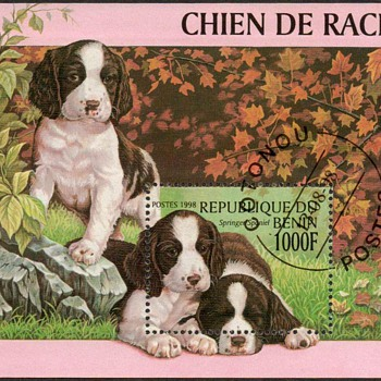 "1998 - Benin - ""Springer Spaniel"" Souvenir Sheet"