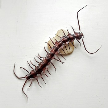 Huge centipede... Painted iron magnet.
