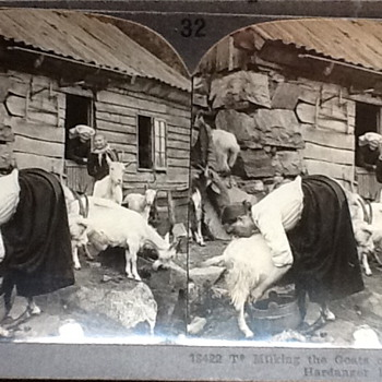 Milking the goats - Photographs