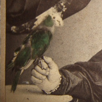CDV of woman with a Parrot