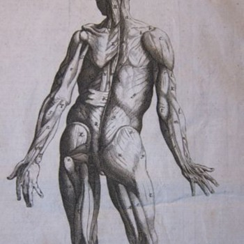 Early Anatomical Engraving (1760) - Posters and Prints