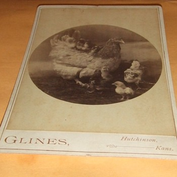 Cabinet card of hens and her chicks - Photographs