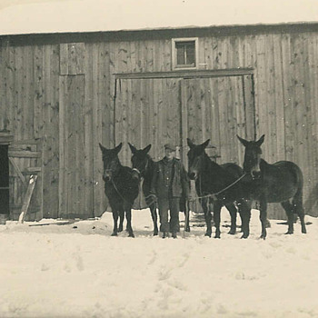 great-grandpa Charlie and his trusty mules - Photographs