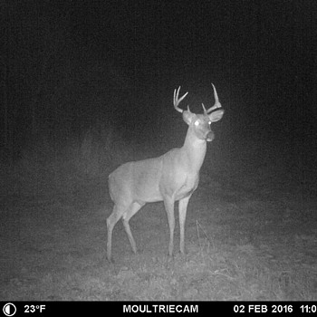 My perfect Buck shot!