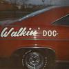 """1966 Impala SS """"WALKIN DOG"""""""