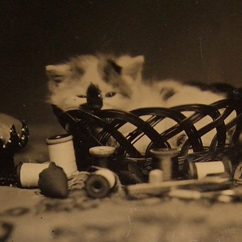 "Kitten ""still life"" in sewing basket"