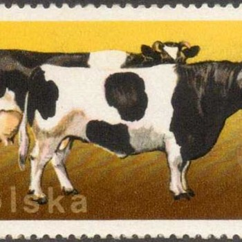 "Poland - ""Cows & Cattle"" Postage Stamps"