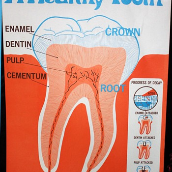 Large Dental Hygiene Posters - Mid-century - 60s-70s? - Posters and Prints