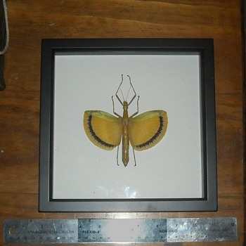 Framed Walking Stick Insect