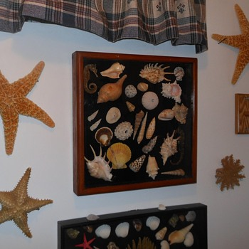 Seashell Shadowbox From Pomona Sreet Fair