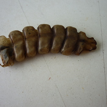 Rattle-snake rattles - Animals