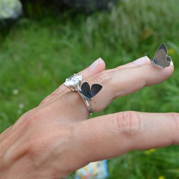 Small blue ( Cupido Minimus) butterflies feeding on my hands