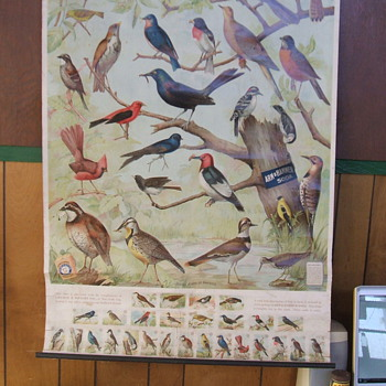 1915 Arm &amp; Hammer Bird Chart and trading cards