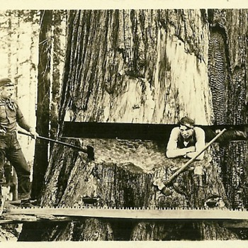 The Method of Falling Timber - Postcards