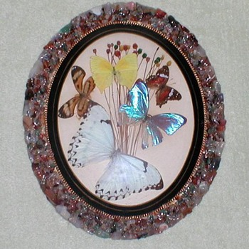 Butterflies from Brazil Wall Plaque