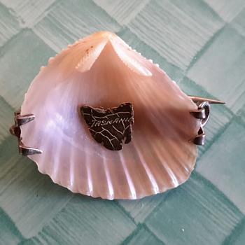 Tasmanian Trigonia Shell Brooch